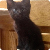Adopt A Pet :: Aviv - River Edge, NJ