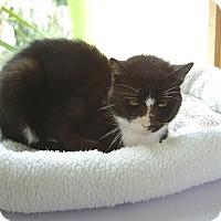 Adopt A Pet :: Oscar - Englewood, FL