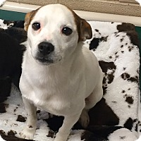 Adopt A Pet :: Knickers - Greensburg, PA