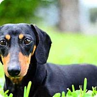 Adopt A Pet :: TITA - West Palm Beach, FL