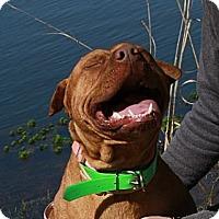 Adopt A Pet :: Hope - Sylvania, GA
