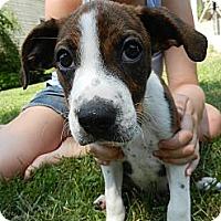 Adopt A Pet :: Lucas - South Jersey, NJ