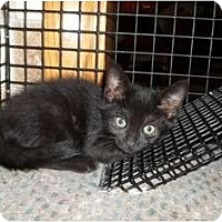 Adopt A Pet :: Brooklyn - Acme, PA