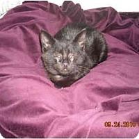 Adopt A Pet :: Marla - Riverside, RI