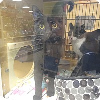 Adopt A Pet :: LUKE - Diamond Bar, CA