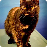 Adopt A Pet :: Purdee - Byron Center, MI