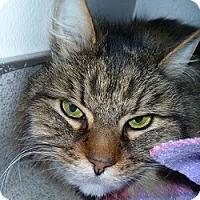 Adopt A Pet :: Kit - Hamburg, NY