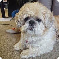 Adopt A Pet :: GOLDIE - Eden Prairie, MN