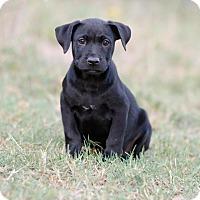 Adopt A Pet :: Ozzy - Seneca, SC