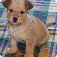Adopt A Pet :: DAISY/pending - Anderson, SC