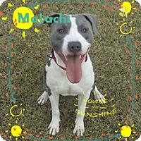 Adopt A Pet :: Malachi-adoption pending - Des Moines, IA