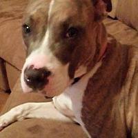 Adopt A Pet :: Windy - St Louis, MO