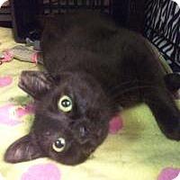 Adopt A Pet :: Ninja - East Brunswick, NJ