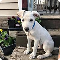Adopt A Pet :: Jay - Marlton, NJ