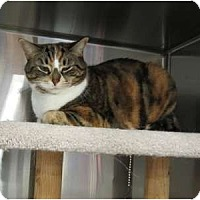 Adopt A Pet :: Mylie - Markham, ON