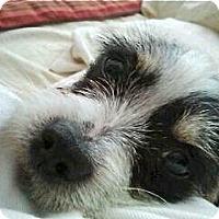 Adopt A Pet :: Cassie - Los Angeles, CA