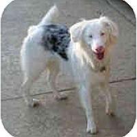 Adopt A Pet :: Teddy - Mesa, AZ