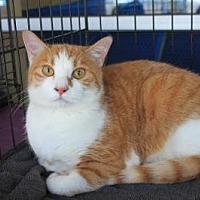 Adopt A Pet :: Marigold - Smyrna, GA