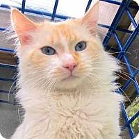 Adopt A Pet :: Caruso - Davis, CA