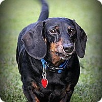 Adopt A Pet :: Buddy - Quincy, IN