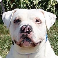 Adopt A Pet :: Jeff - Monroe, MI