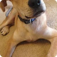 Adopt A Pet :: Bronson - Daleville, AL
