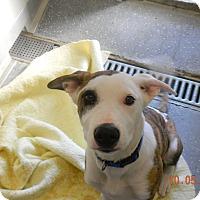 Adopt A Pet :: DUKE - Sandusky, OH