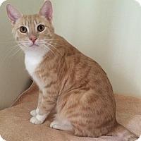 Adopt A Pet :: SHORTY - Van Nuys, CA