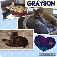 Adopt A Pet :: Grayson - Keller, TX