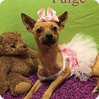 Adopt A Pet :: Paige LBM in RI - Providence, RI