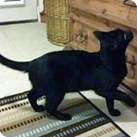 Adopt A Pet :: BB - Bulverde, TX
