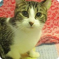 Adopt A Pet :: Runt - Lloydminster, AB