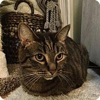 Adopt A Pet :: Dasher - Sherman Oaks, CA