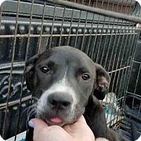 Adopt A Pet :: SMOKEY - San Antonio, TX