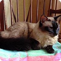 Adopt A Pet :: Morgan - West Palm Beach, FL