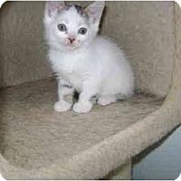 Adopt A Pet :: Babby girl - Etobicoke, ON