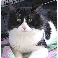 Adopt A Pet :: Gordon - AUSTIN, TX