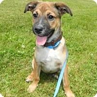 Adopt A Pet :: Chloe - Haverhill, MA