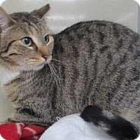 Adopt A Pet :: Ambrosia - Riverhead, NY