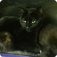 Adopt A Pet :: Melinda - Vancouver, BC