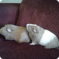 Adopt A Pet :: Willie & Donny - San Antonio, TX