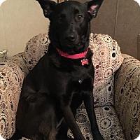 Adopt A Pet :: Hope - Quincy, IN