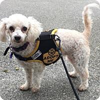 Adopt A Pet :: Mop - adoption pending - Gig Harbor, WA