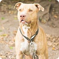 Adopt A Pet :: Fletch - Houston, TX
