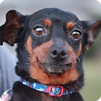 Adopt A Pet :: Zeke - Nanuet, NY