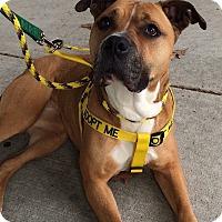 Adopt A Pet :: Darla - Jackson, NJ