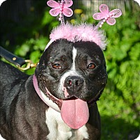 Adopt A Pet :: Bertha - Vallejo, CA
