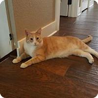 Adopt A Pet :: Echo - Des Moines, IA
