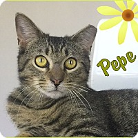 Adopt A Pet :: Pepe - Sherman Oaks, CA