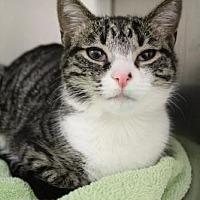 Adopt A Pet :: Sassy - Columbia, SC